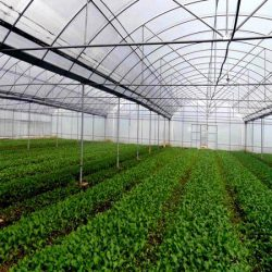 Industrial-Agriculture-Film-Greenhouse-for-Sale
